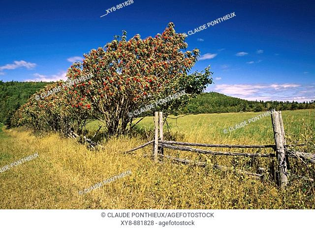 Field-and-Fence