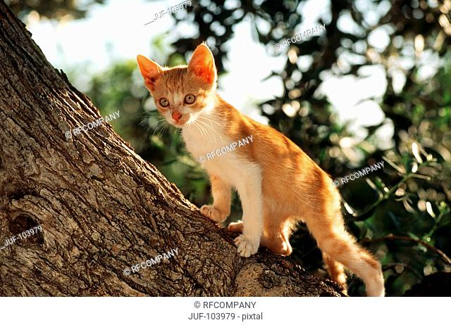 young domestic cat - standing on tree