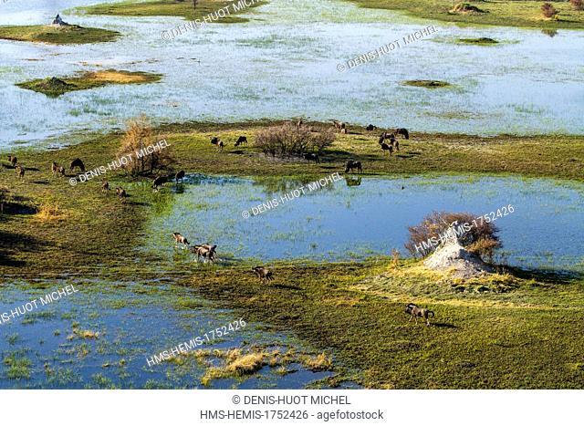 Botswana, Moremi game reserve, Okavango Delta listed as World Heritage by UNESCO, blue wildebeest (Connochaetes taurinus) (aerial view)