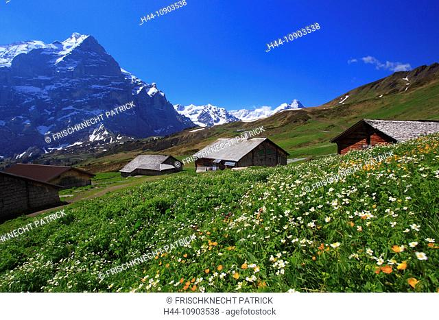 Alp, alps, flora, nightmare huts, view, mountain, mountain panorama, mountains, mountain flora, mountain spring, mountain massif, mountain panorama
