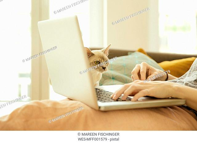 Woman with Burmese cat using laptop
