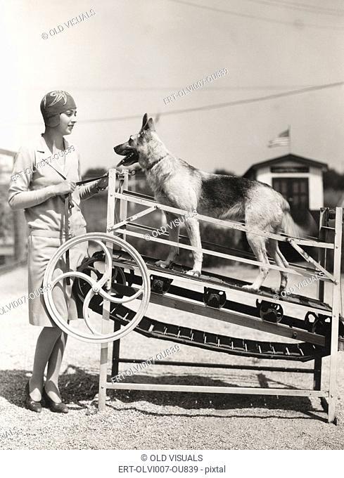 A German shepherd gets his exercise (OLVI007-OU839-F)