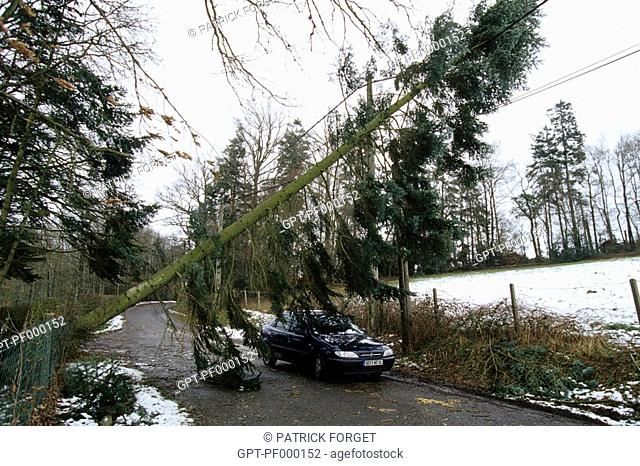 UPROOTED TREES, BAD WEATHER AND DAMAGE CAUSED BY THE STORMS IN DECEMBER 1999, EURE, NORMANDY, FRANCE