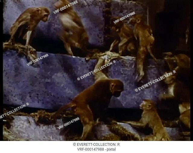 Monkeys climbing rock formation