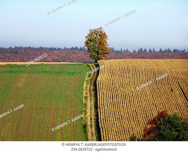Silesian Beskid, Poland