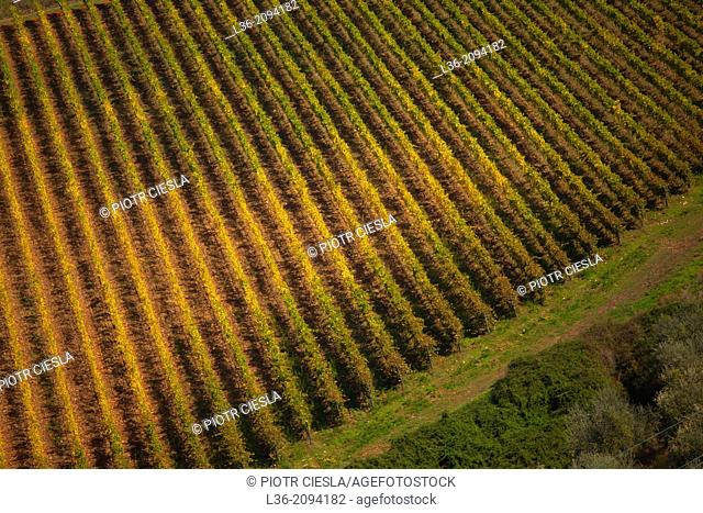 Vineyards in autumn, Tuscany, Italy
