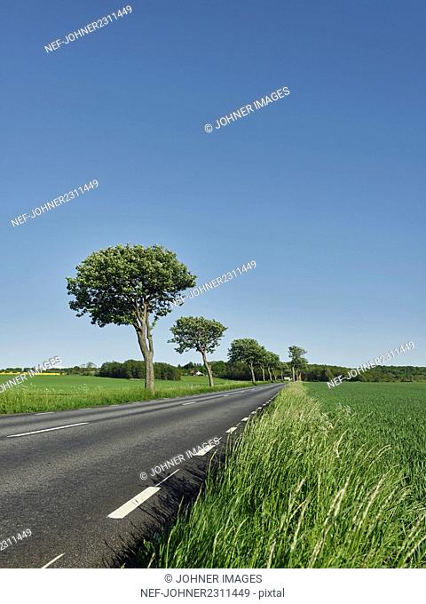 Empty road in countryside