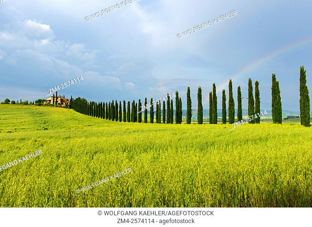 Storm clouds over landscape with field, farm house, and Italian cypress trees (Cupressus sempervirens) near San Quirico in the Val d'Orcia near Pienza in...