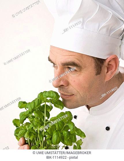 Cook smelling basil leaves