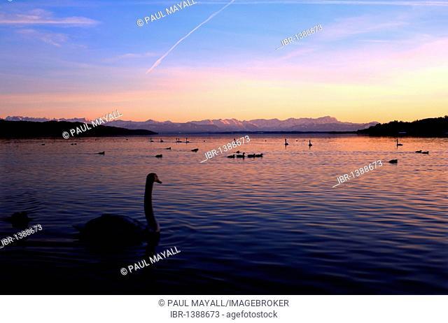 View across Lake Starnberg at sunset to the Bavarian Alps, Upper Bavaria, Germany, Europe
