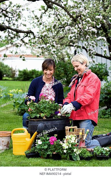 Two women setting flowers in pots, Sweden