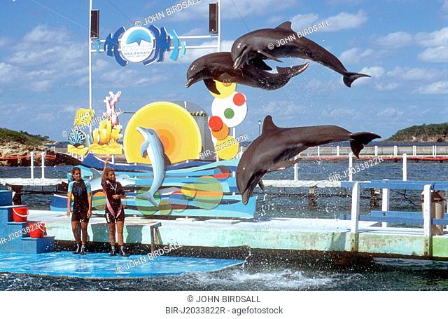 Display of dolphins jumping out of water near Guardalavaca, Cuba