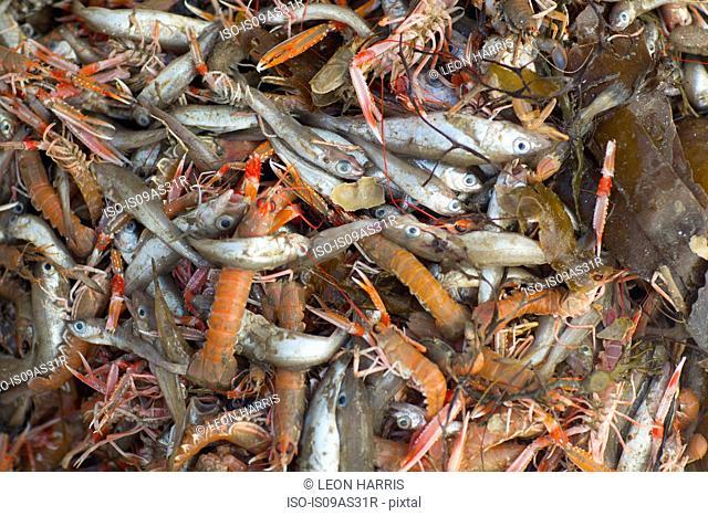 Assortment of fish and shellfish