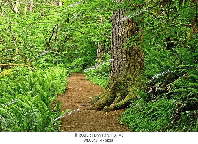 A pathway cuts through lush spring vegetation