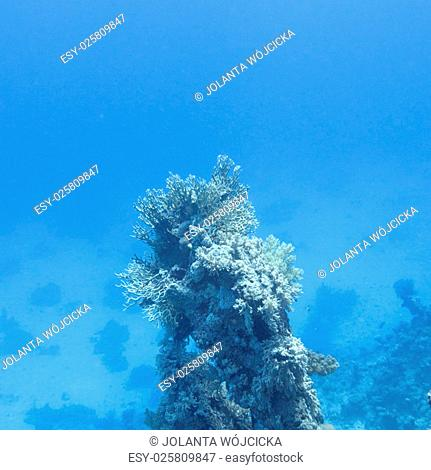 coral reef at the bottom of tropical sea on great depth on a blue water background