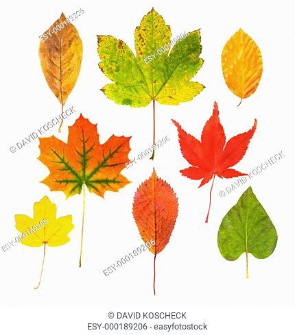 Farben des Herbstes
