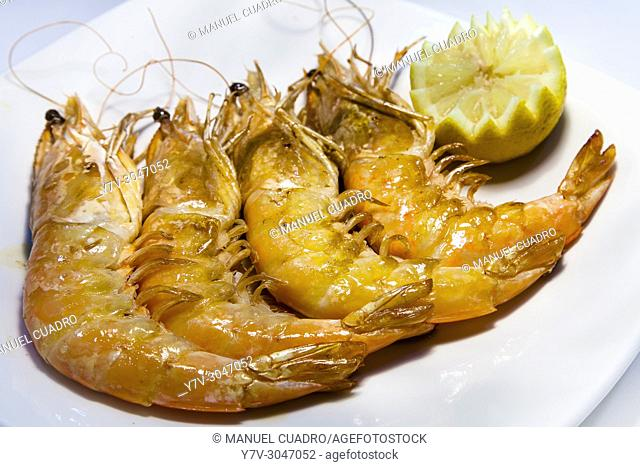 Plato de Langostinos de Huelva a la plancha / Grilled Huelva Shrimps. Basque Country, Spain