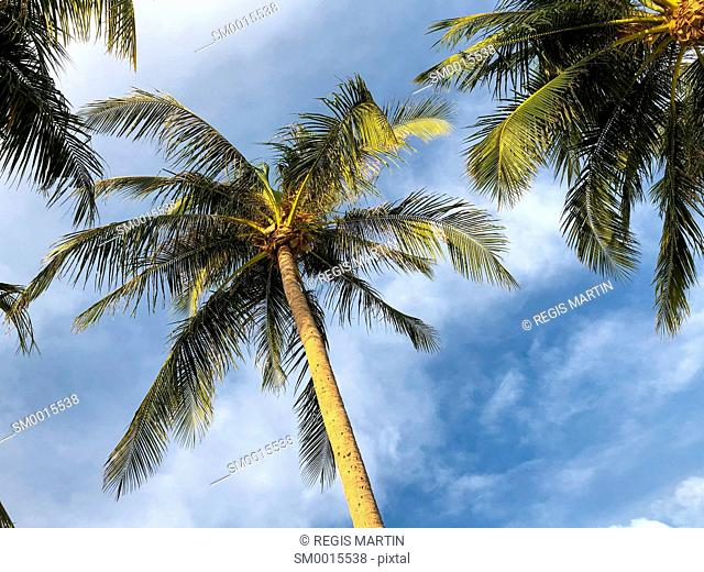 Top of palm trees against the sky
