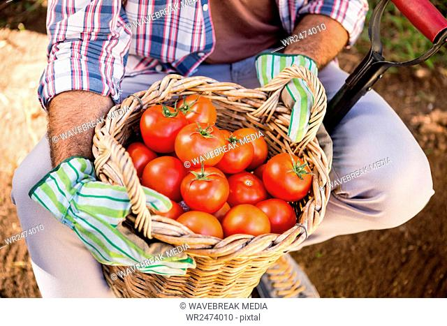 Midsection of gardener holding fresh tomatoes in basket with shovel at garden