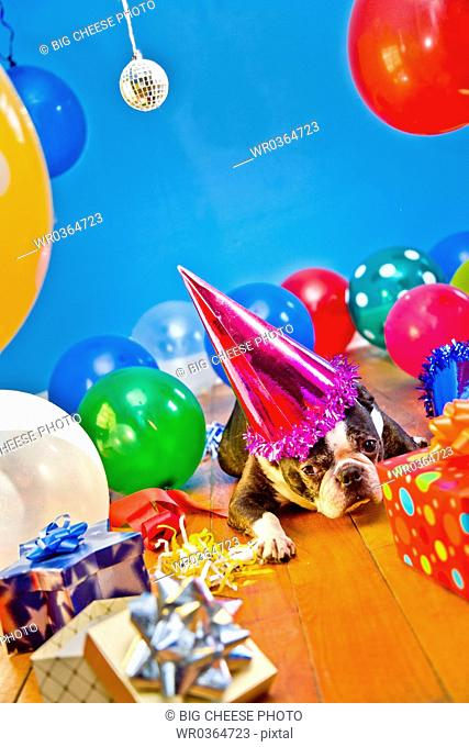 dog in party hat with balloons