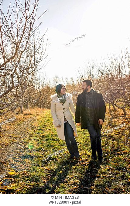 Two people, a couple walking in an orchard in winter