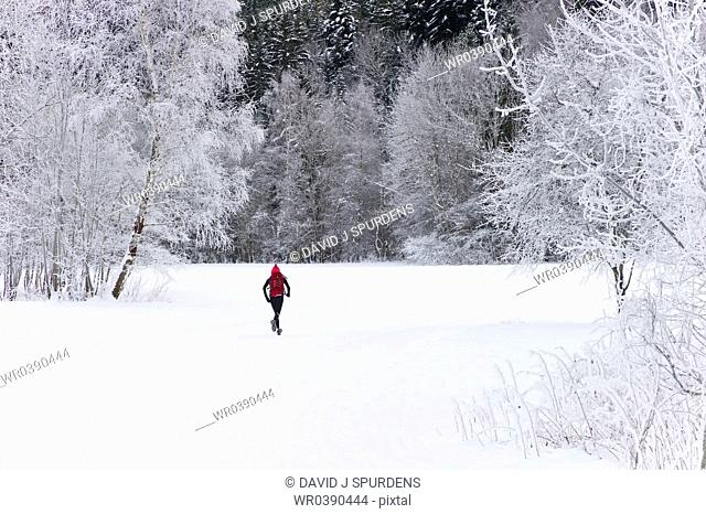 A jogging runs through a snowy forest