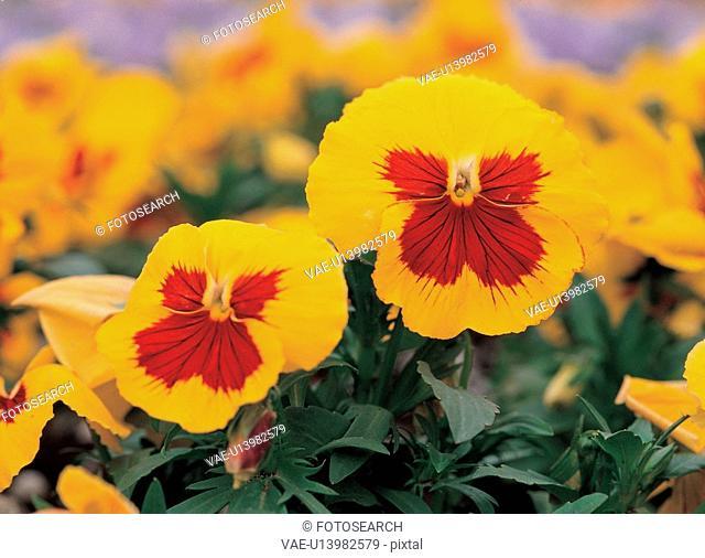 plants, nature, background, flower, plant, film