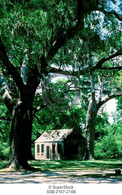 Slave Cabin Boone Hall Plantation South Carolina USA