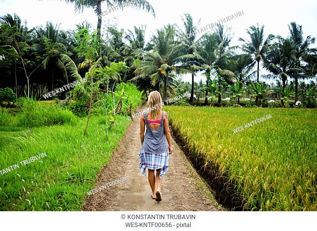 Indonesia, Java, back view of woman walking on dirt track through rice fields