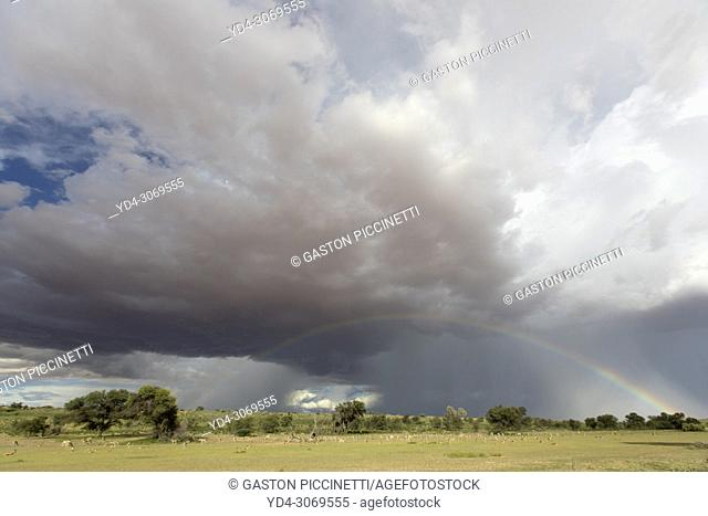 Rainbow in the sky. Stormy clouds and green meadows are part of this wonderful landscape, during the rainy season, Kgalagadi Transfrontier Park, Kalahari desert