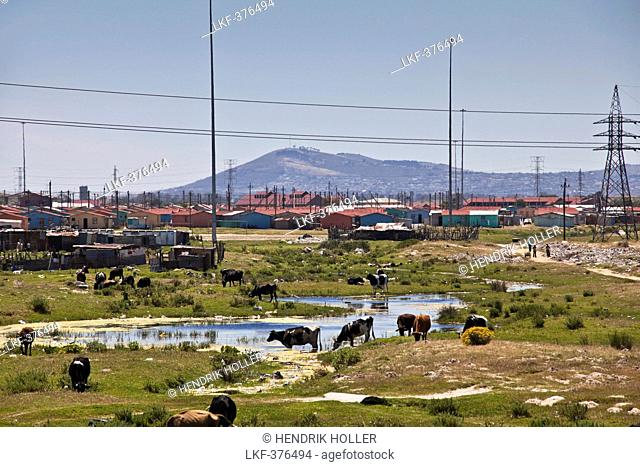 Township Khayelitsha, Cape Town, Western Cape, South Africa
