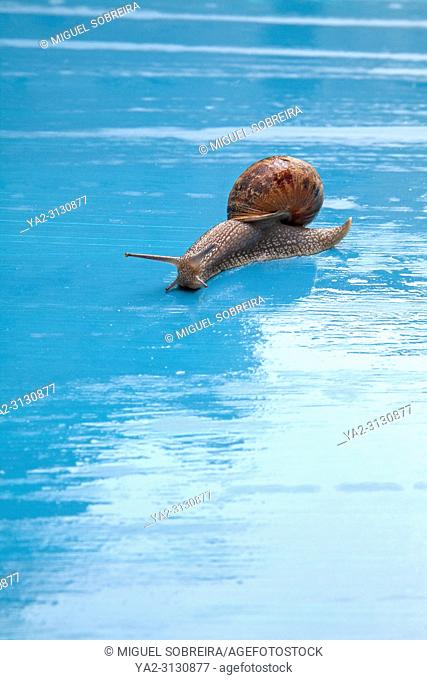 Snail on Wet Blue Ground