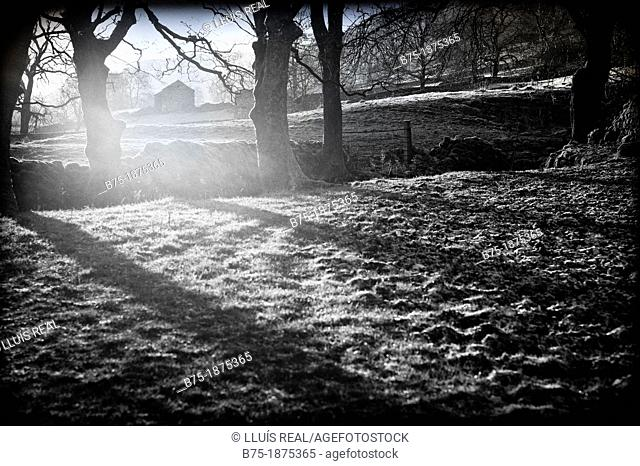 UK, England, North Yorkshire, Yorkshire Dales, scenery of the countryside with trees and shadows