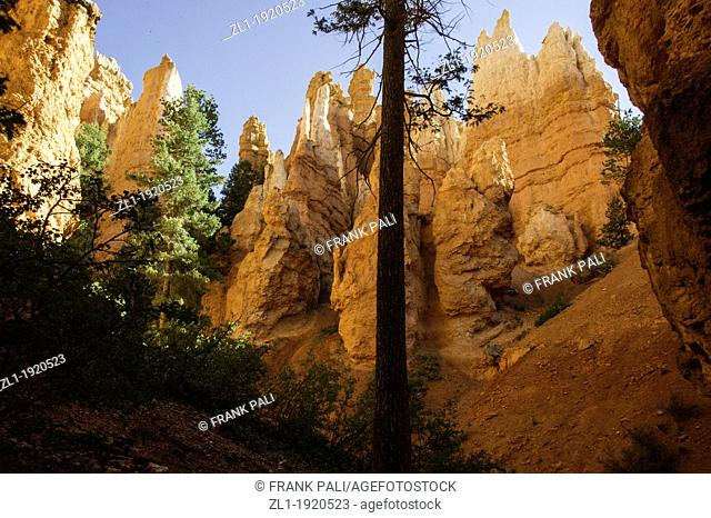 Navajo Trail begins at Sunset Point and travels down into the main amphitheater  This is one of the more popular trails and extra caution is advised due to the...
