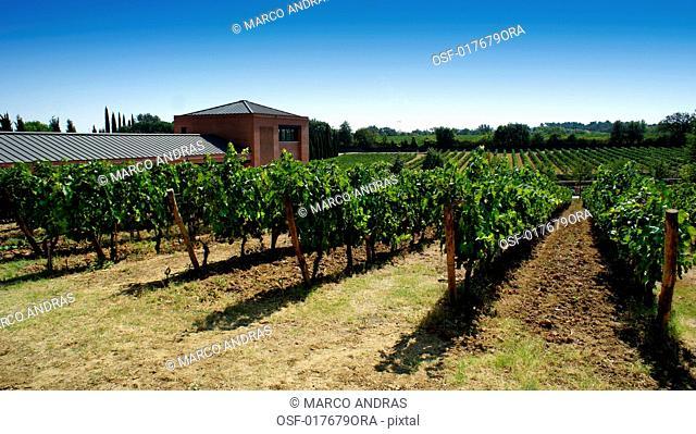 Italy, Tuscany, Montepulciano
