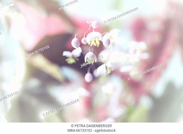 small blossoms, close-up - pastel colours, soft and romantical