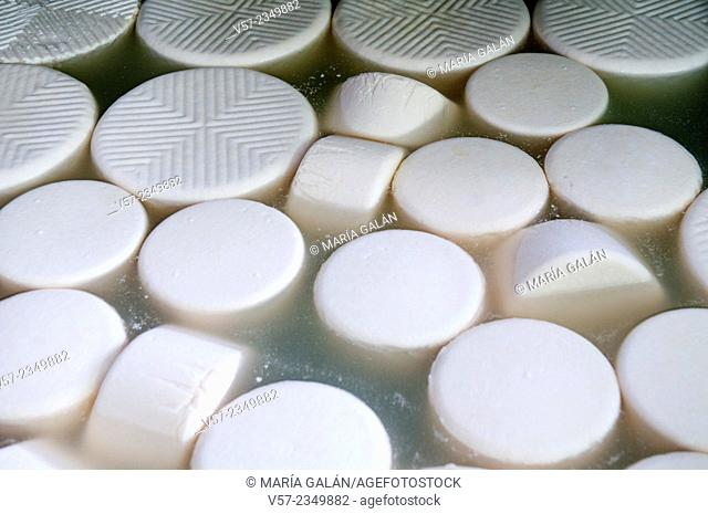Cheeses in the cheese factory. Asturias, Spain