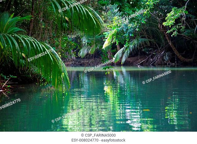Tranquil lake with lush tropical vegetation