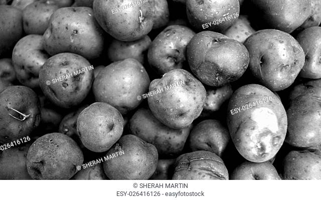Background of many red potatoes together in widescreen. Black and white vegetable background of fresh potatoes