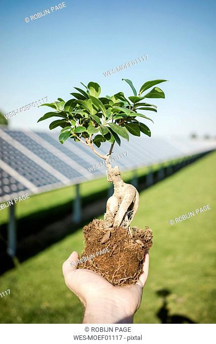 Male hand holding privet, solar plant