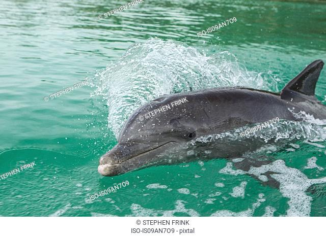 Dolphin swims in wake of boat