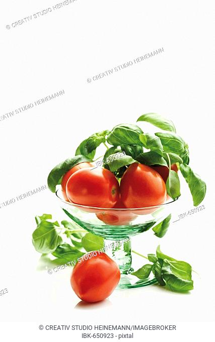 Plum tomatoes, Heirloom Tomato variety (Lycopersicon esculentum) and basil