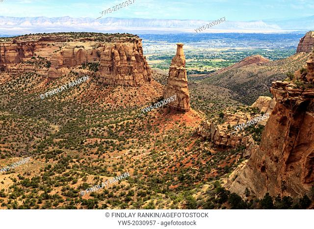 View of Monument Canyon at Colorado National Monument, Colorado, USA. Pinyon Juniper woodland pine growing wild on the floor of the canyon.1015