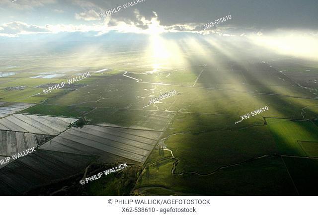 Rice fields, California, USA