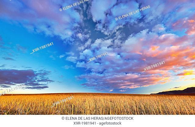 Ploughed field landscape. Northwest of Guadalajara province. Castille La Mancha. Spain