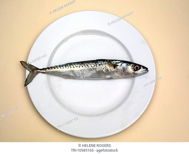 Mackeral on a Plate