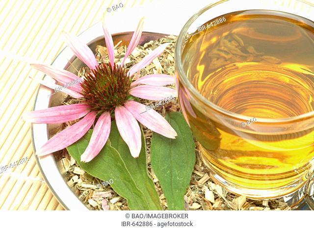 Purple Coneflower (Echinacea purpurea), Echinacea tea, herbal tea