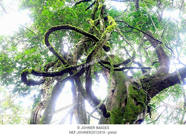 Low angle view of twisted branches in forest