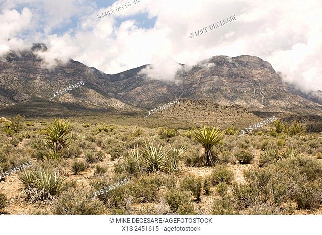Red Rock Canyon, 17 miles west of Las Vegas, attracts visitors and hikers to experience the desert landscape