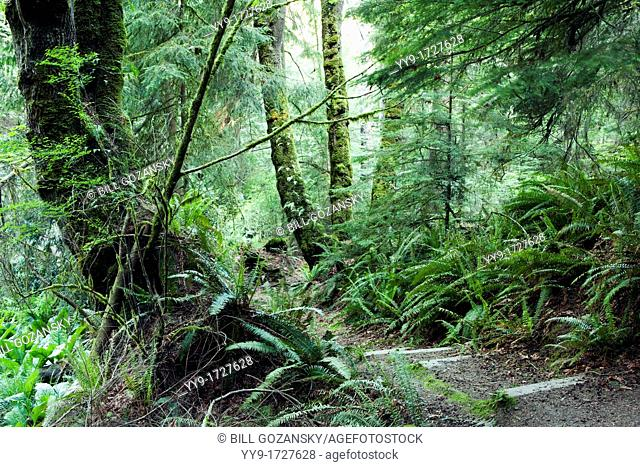 Tree Pattern - South Whidbey Island State Park - Whidbey Island - Washington, USA